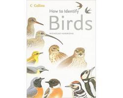 How to identify birds 1790Ft Antikvár könyvek
